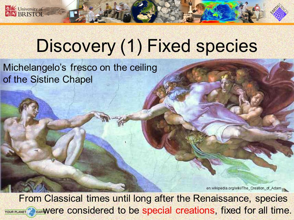 Discovery (1) Fixed species