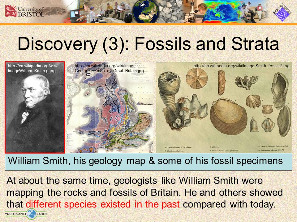 Discovery (3): Fossils and Strata
