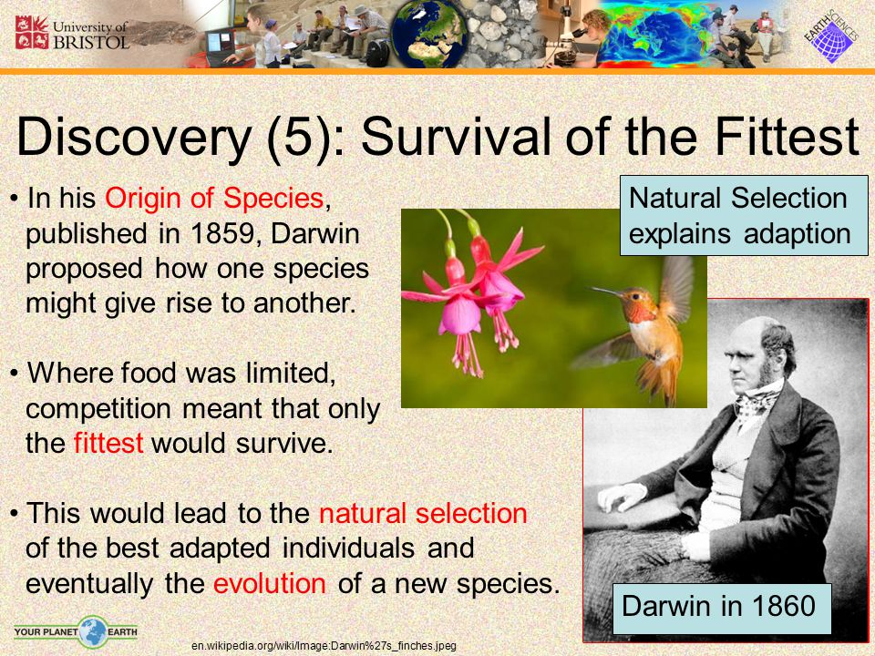 Discovery (5): Survival of the Fittest