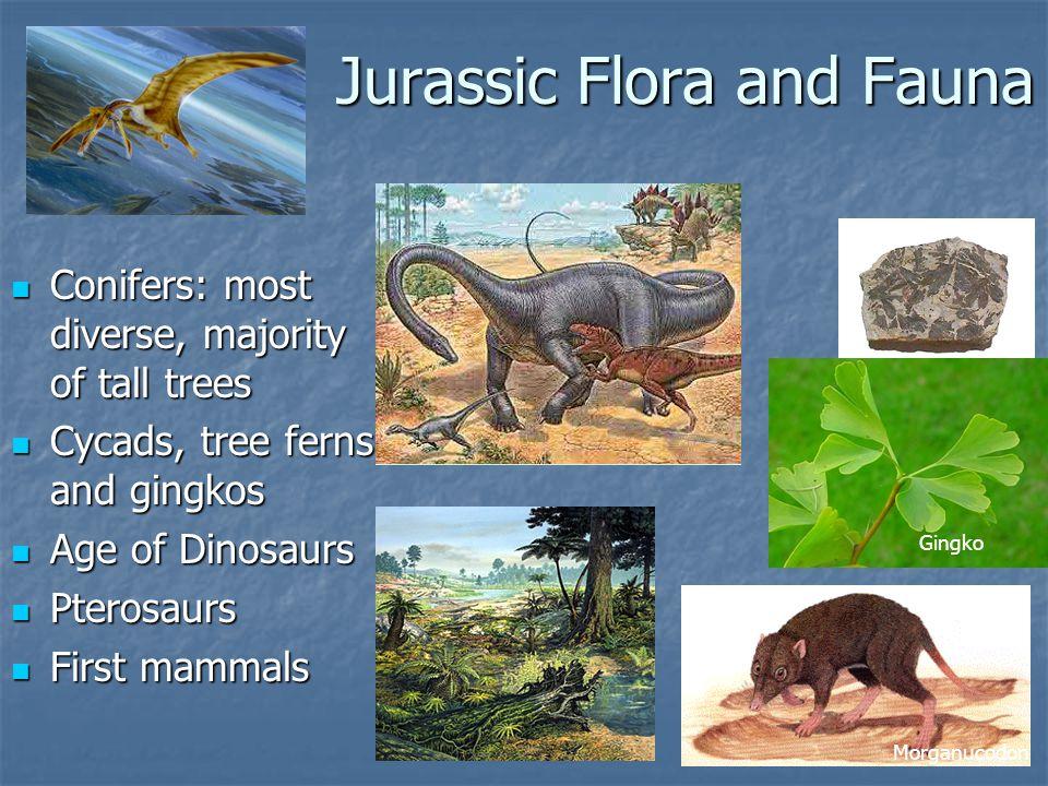 Jurassic Flora and Fauna