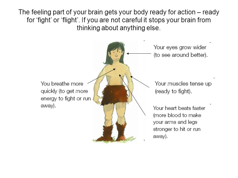 The feeling part of your brain gets your body ready for action – ready for 'fight' or 'flight'.