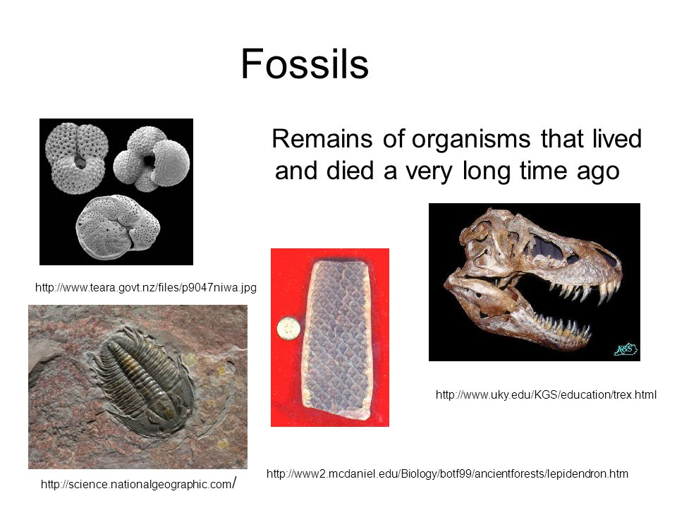 Fossils Remains of organisms that lived and died a very long time ago