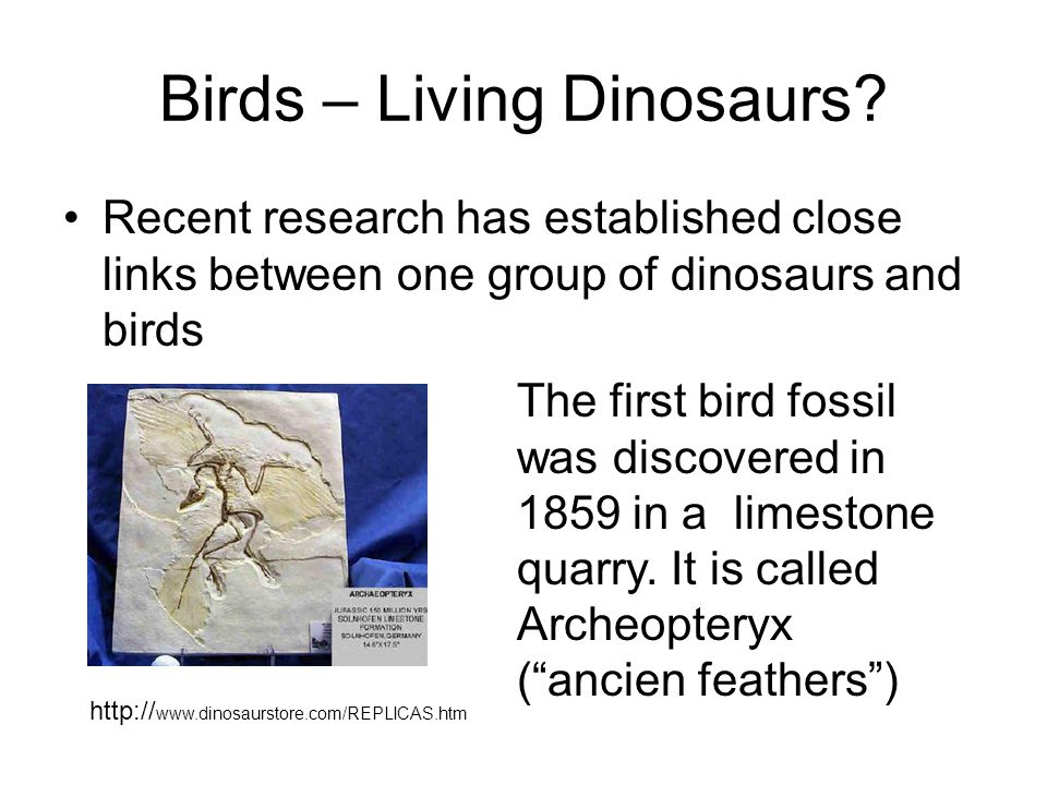 Birds – Living Dinosaurs