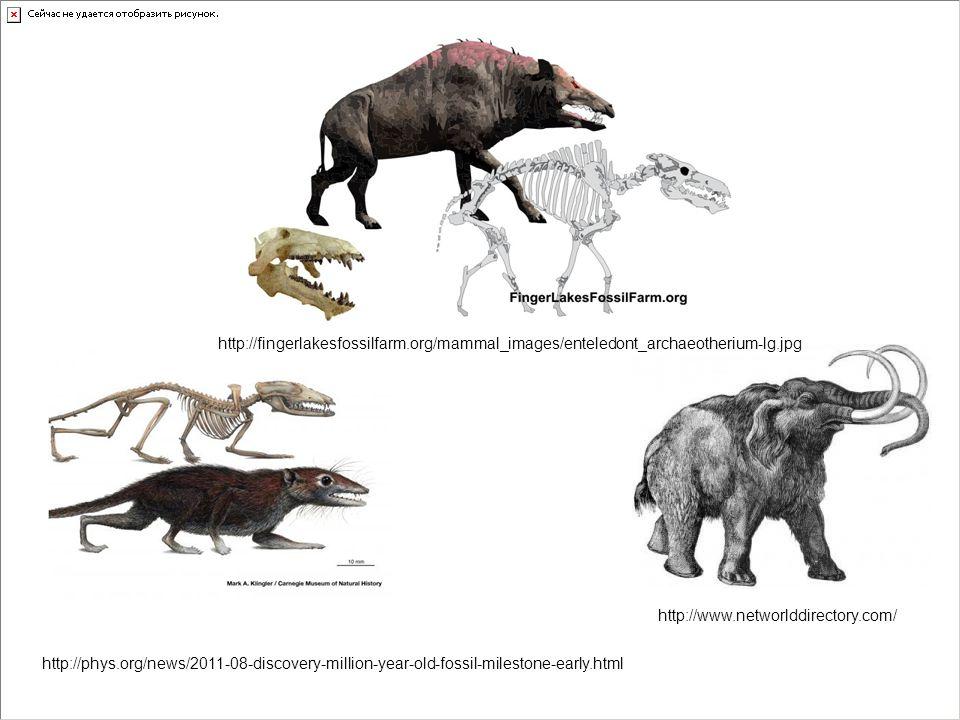 http://fingerlakesfossilfarm.org/mammal_images/enteledont_archaeotherium-lg.jpg http://www.networlddirectory.com/