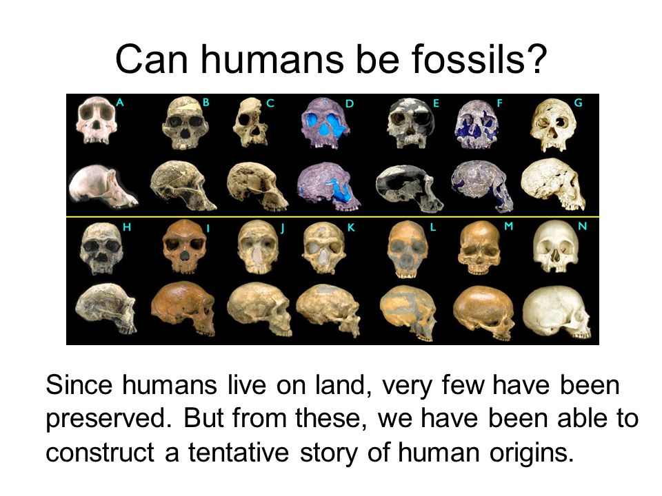 Can humans be fossils