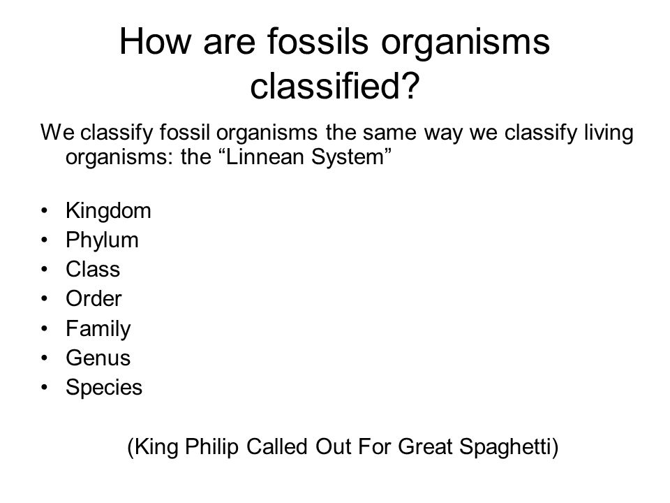How are fossils organisms classified
