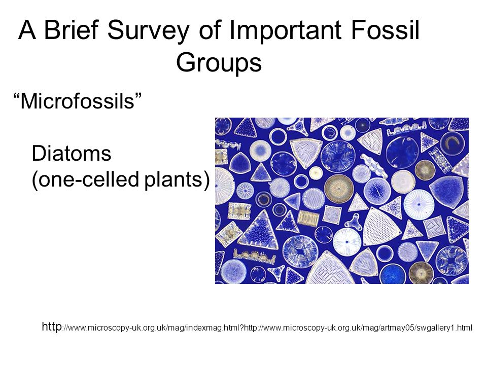 A Brief Survey of Important Fossil Groups