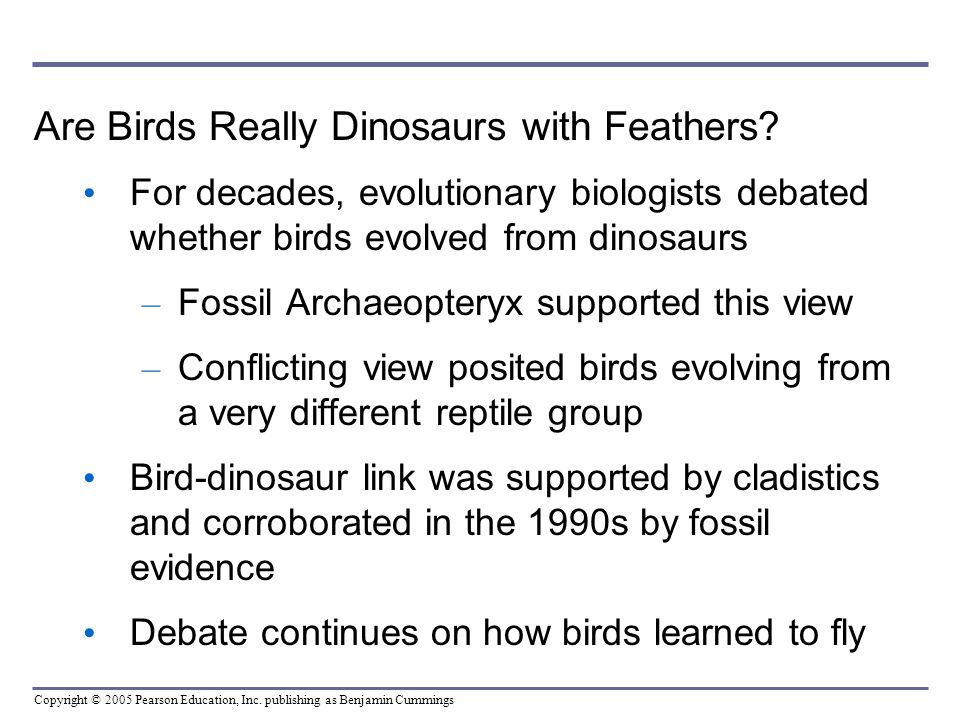 Are Birds Really Dinosaurs with Feathers