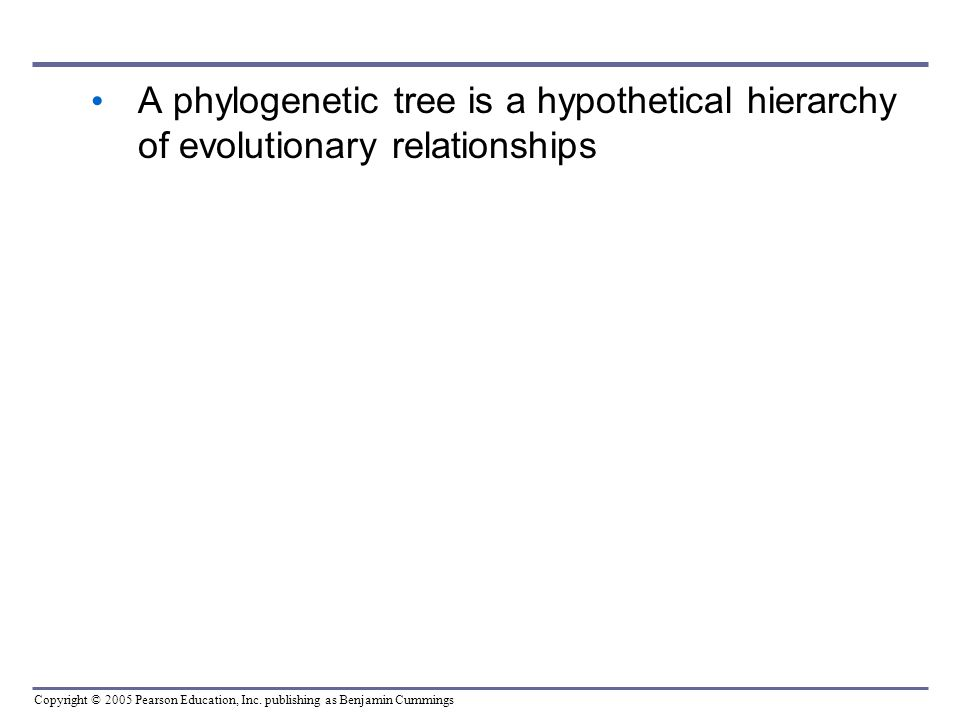 A phylogenetic tree is a hypothetical hierarchy of evolutionary relationships