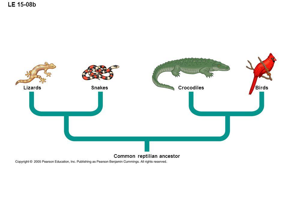 LE 15-08b Lizards Snakes Crocodiles Birds Common reptilian ancestor