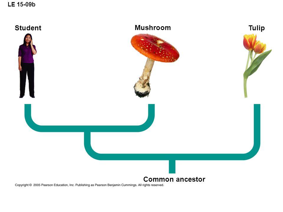 LE 15-09b Student Mushroom Tulip Common ancestor