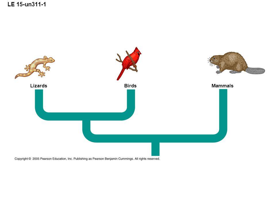 LE 15-un311-1 Lizards Birds Mammals