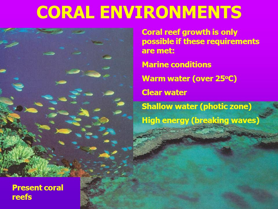 CORAL ENVIRONMENTS Coral reef growth is only possible if these requirements are met: Marine conditions.