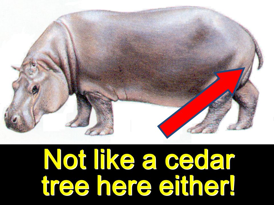 Not like a cedar tree here either!
