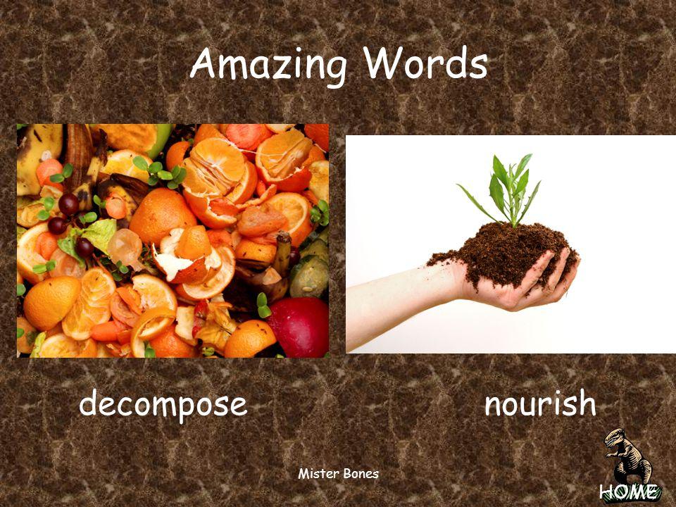 Amazing Words decompose nourish Mister Bones