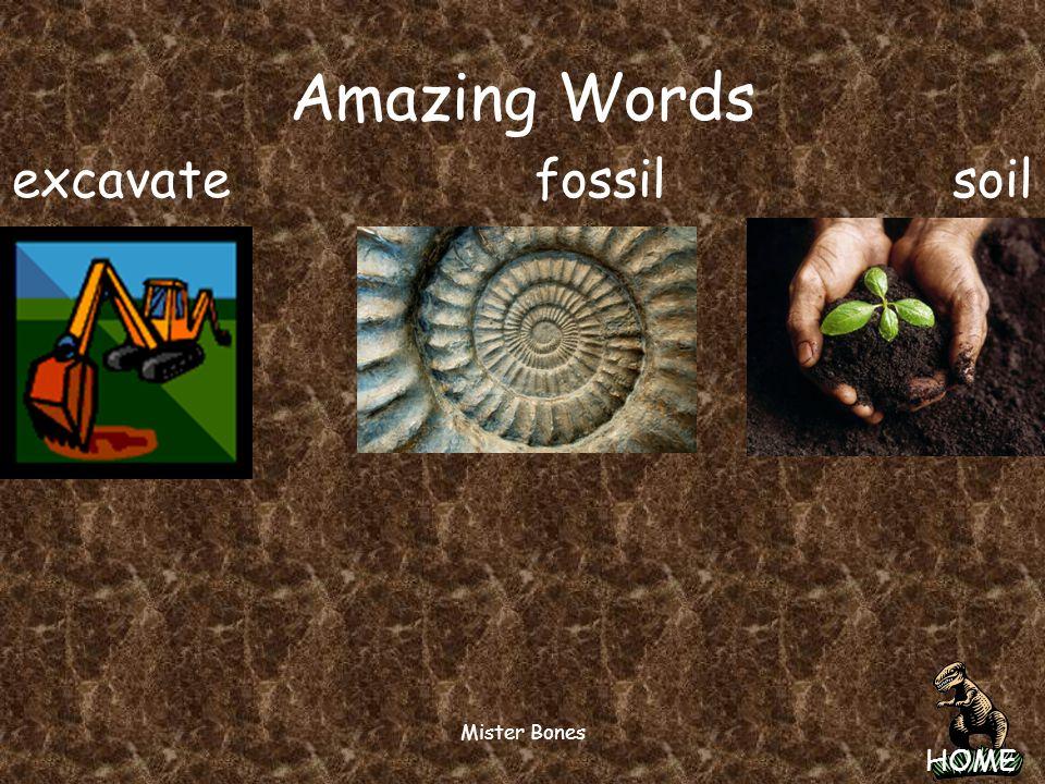 Amazing Words excavate fossil soil Mister Bones