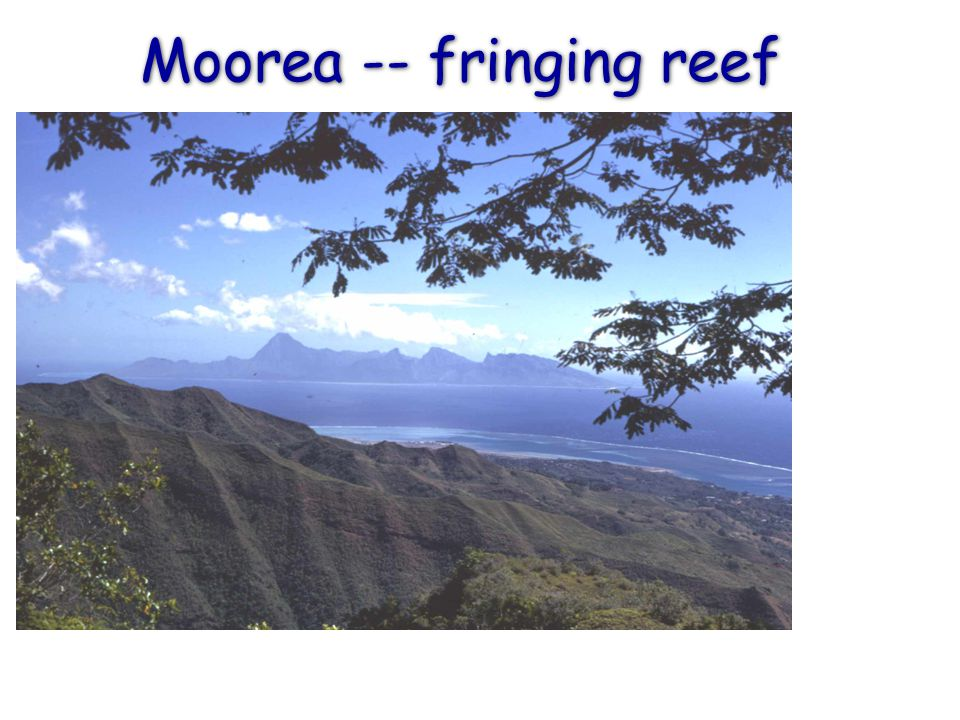 Moorea -- fringing reef