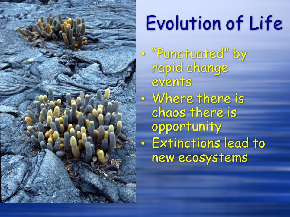 Evolution of Life Punctuated by rapid change events