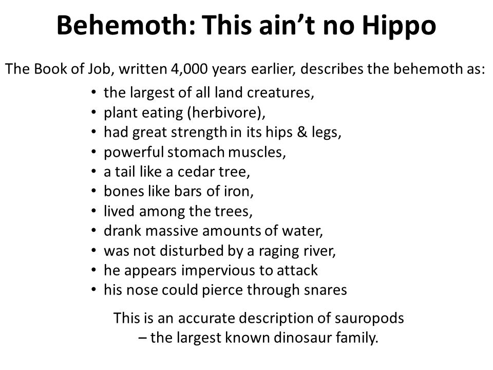 Behemoth: This ain't no Hippo