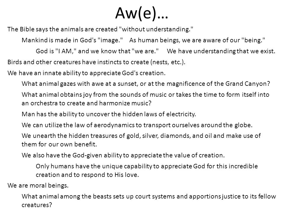 Aw(e)… The Bible says the animals are created without understanding.