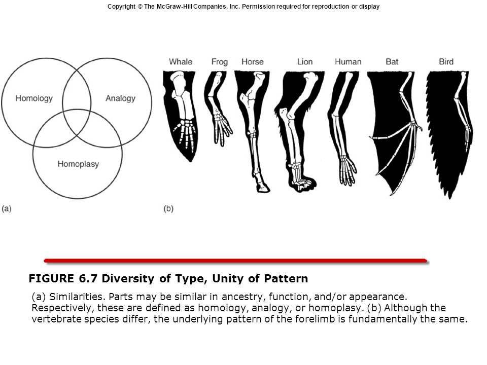 FIGURE 6.7 Diversity of Type, Unity of Pattern