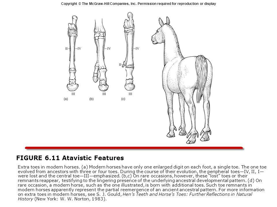FIGURE 6.11 Atavistic Features