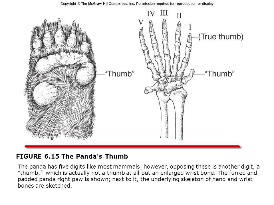 FIGURE 6.15 The Panda's Thumb