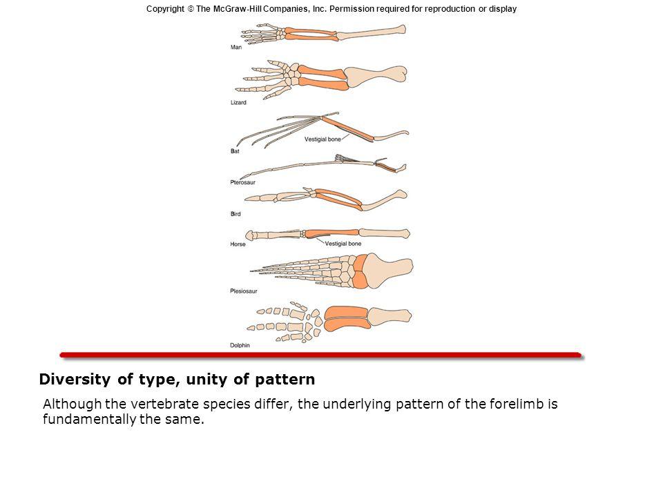 Diversity of type, unity of pattern