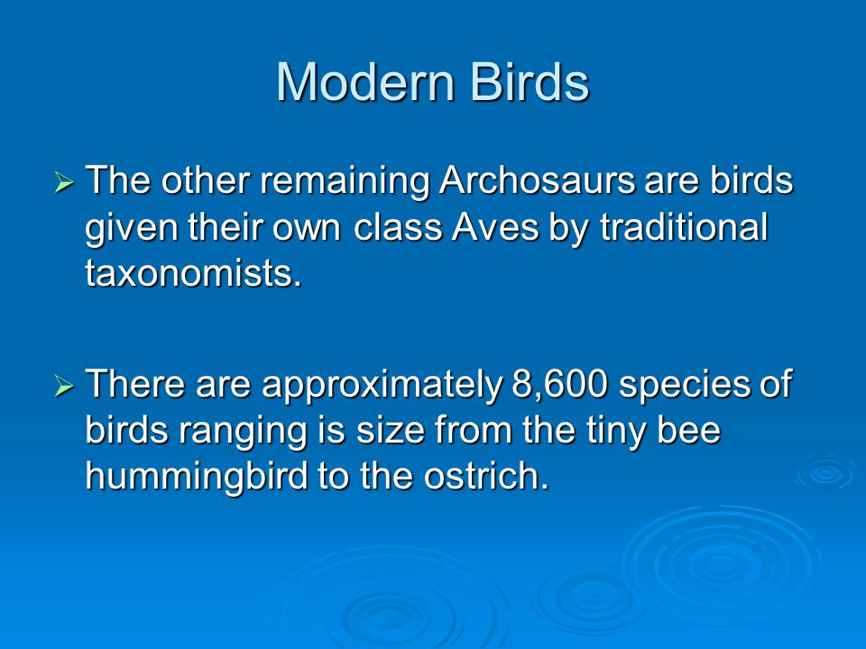 Modern Birds The other remaining Archosaurs are birds given their own class Aves by traditional taxonomists.