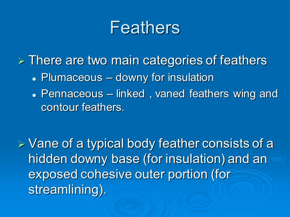 Feathers There are two main categories of feathers