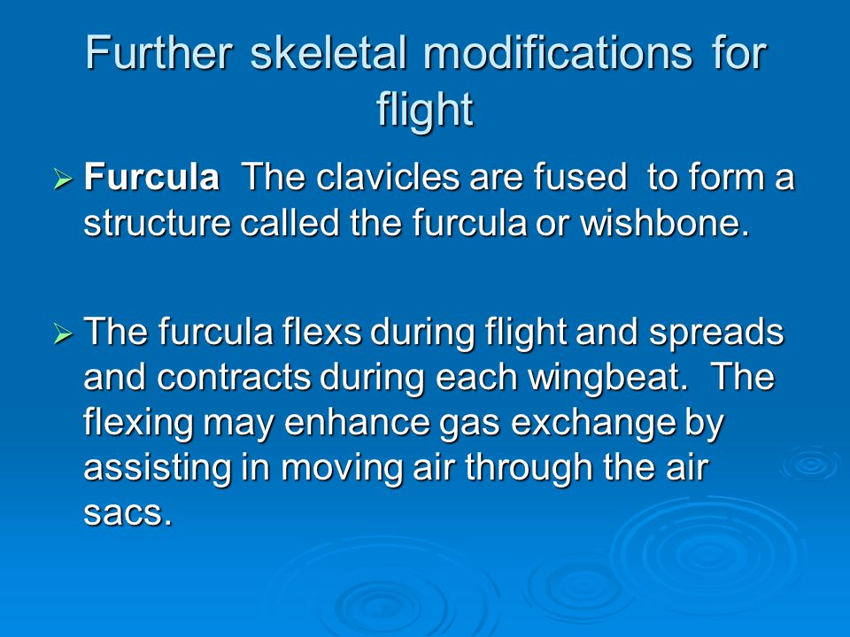 Further skeletal modifications for flight