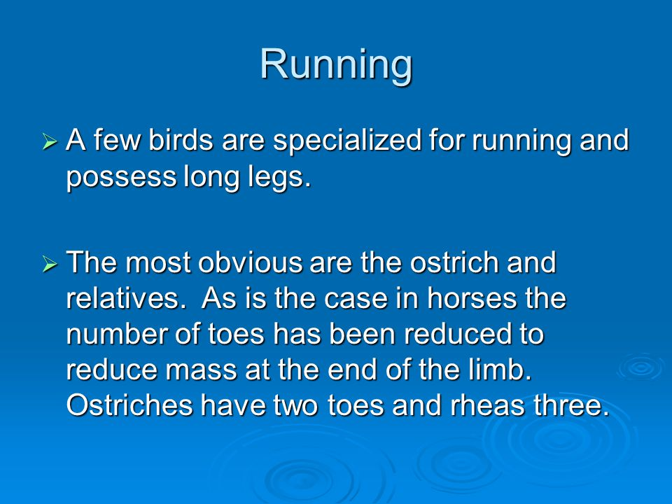 Running A few birds are specialized for running and possess long legs.
