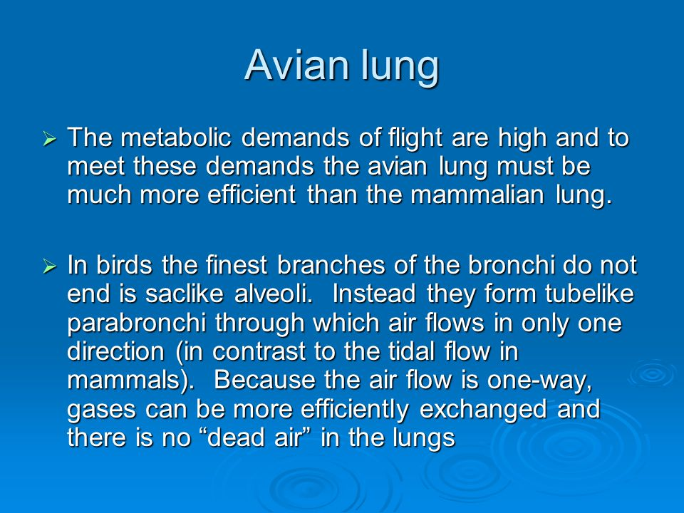 Avian lung The metabolic demands of flight are high and to meet these demands the avian lung must be much more efficient than the mammalian lung.