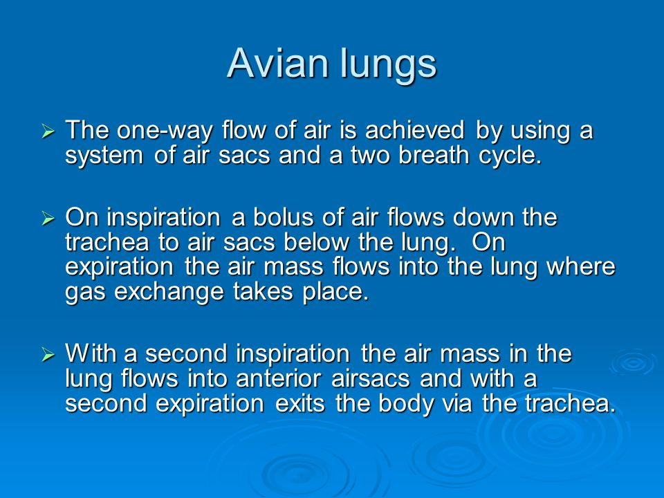 Avian lungs The one-way flow of air is achieved by using a system of air sacs and a two breath cycle.