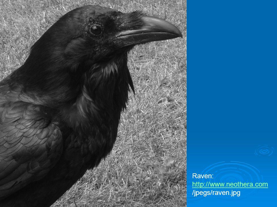 Raven: http://www.neothera.com /jpegs/raven.jpg