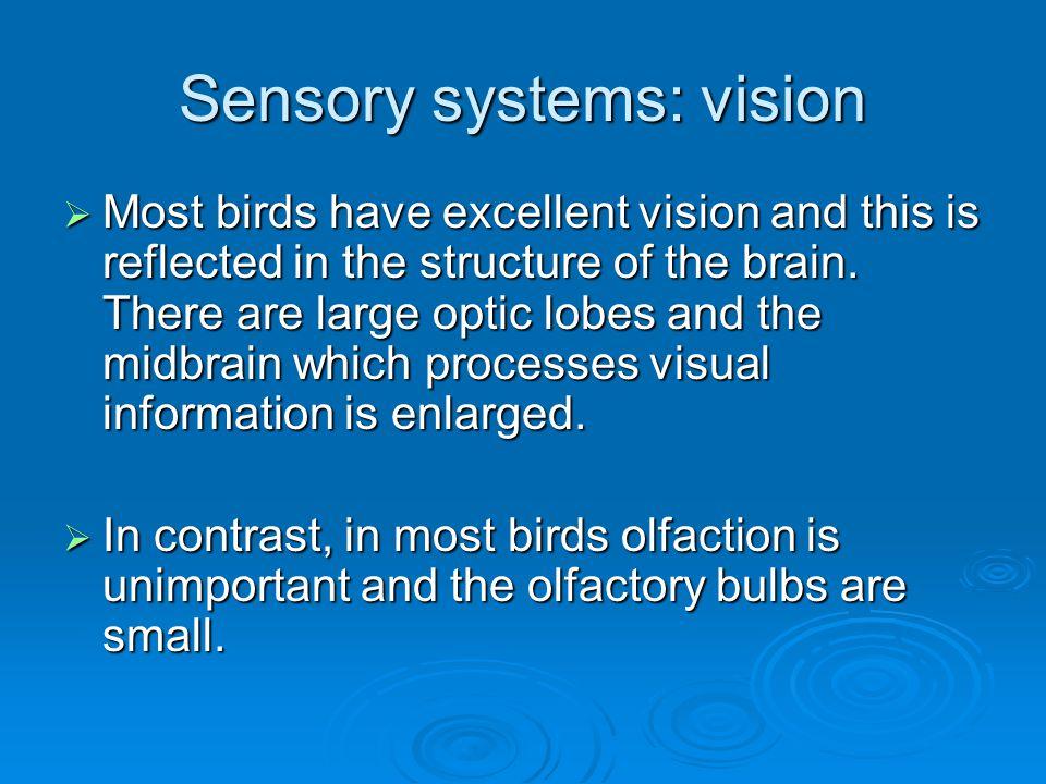 Sensory systems: vision