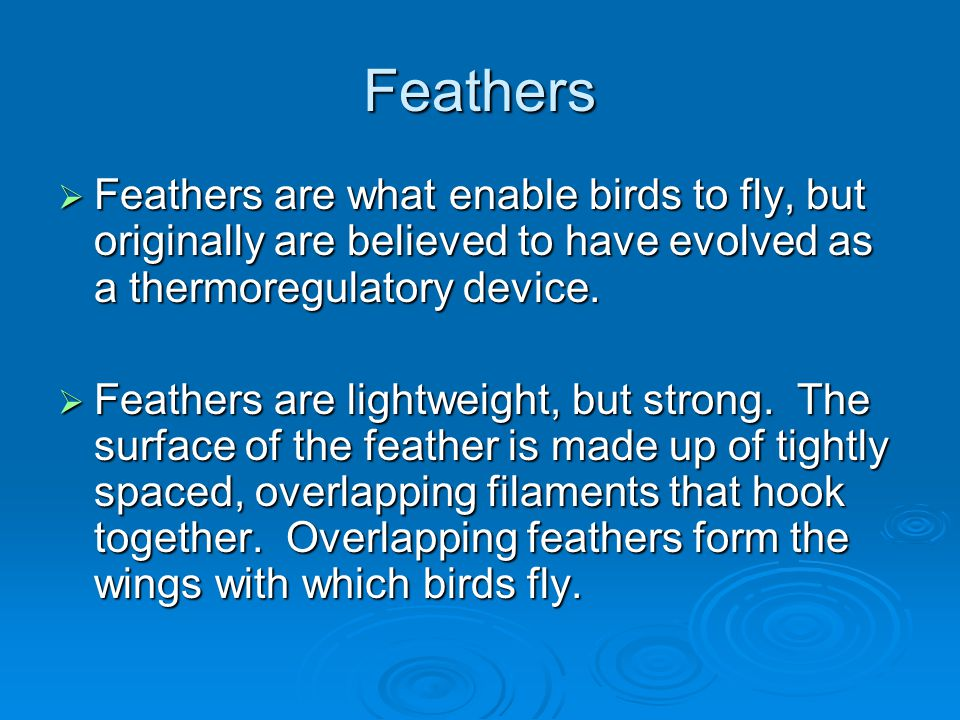 Feathers Feathers are what enable birds to fly, but originally are believed to have evolved as a thermoregulatory device.
