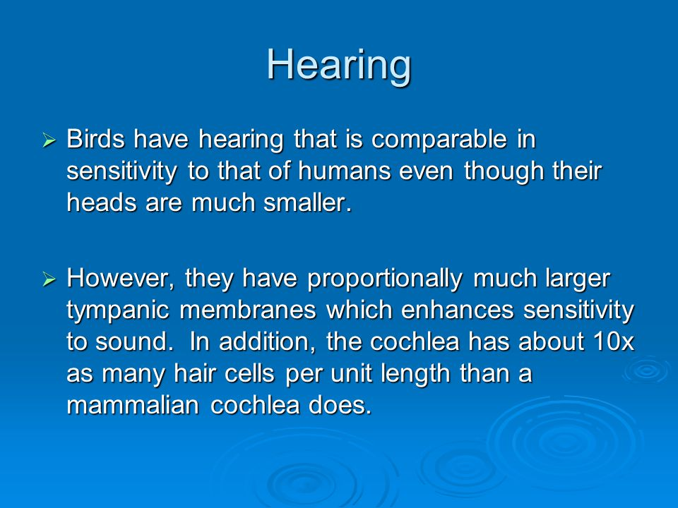 Hearing Birds have hearing that is comparable in sensitivity to that of humans even though their heads are much smaller.