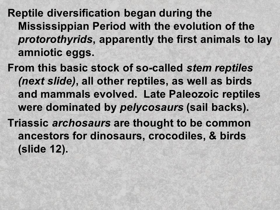 Reptile diversification began during the Mississippian Period with the evolution of the protorothyrids, apparently the first animals to lay amniotic eggs.