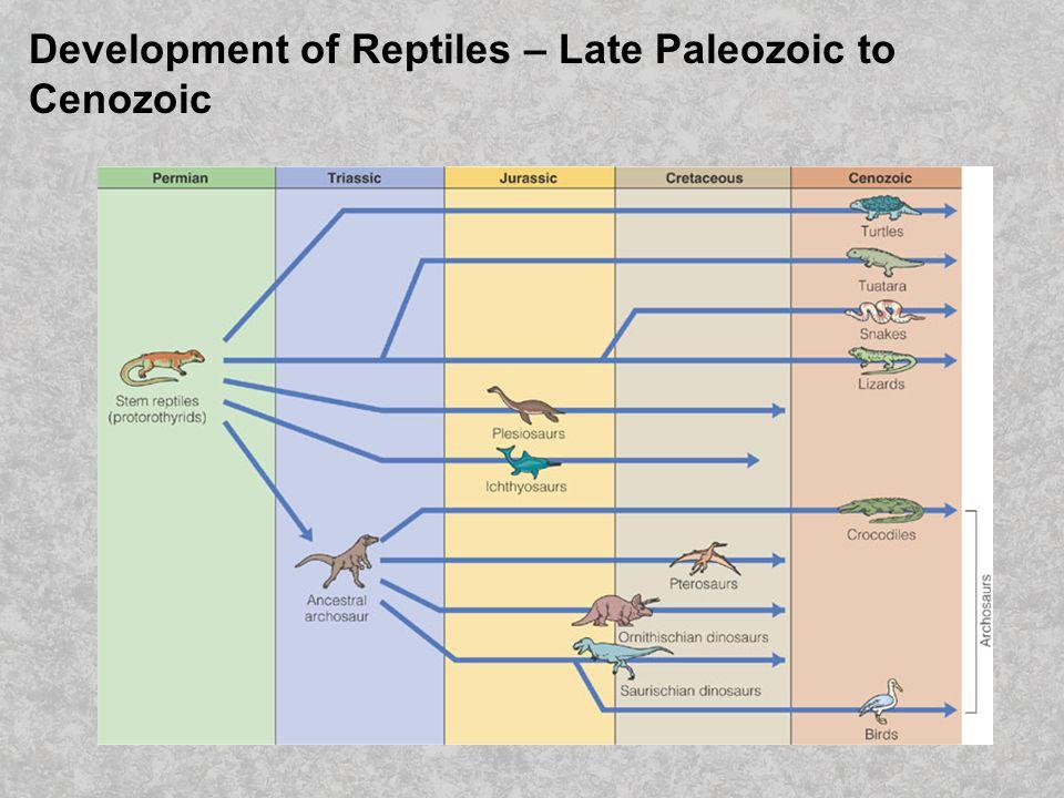 Development of Reptiles – Late Paleozoic to Cenozoic