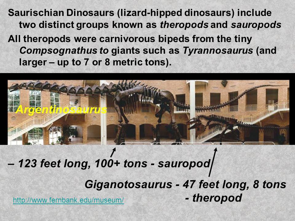 – 123 feet long, 100+ tons - sauropod