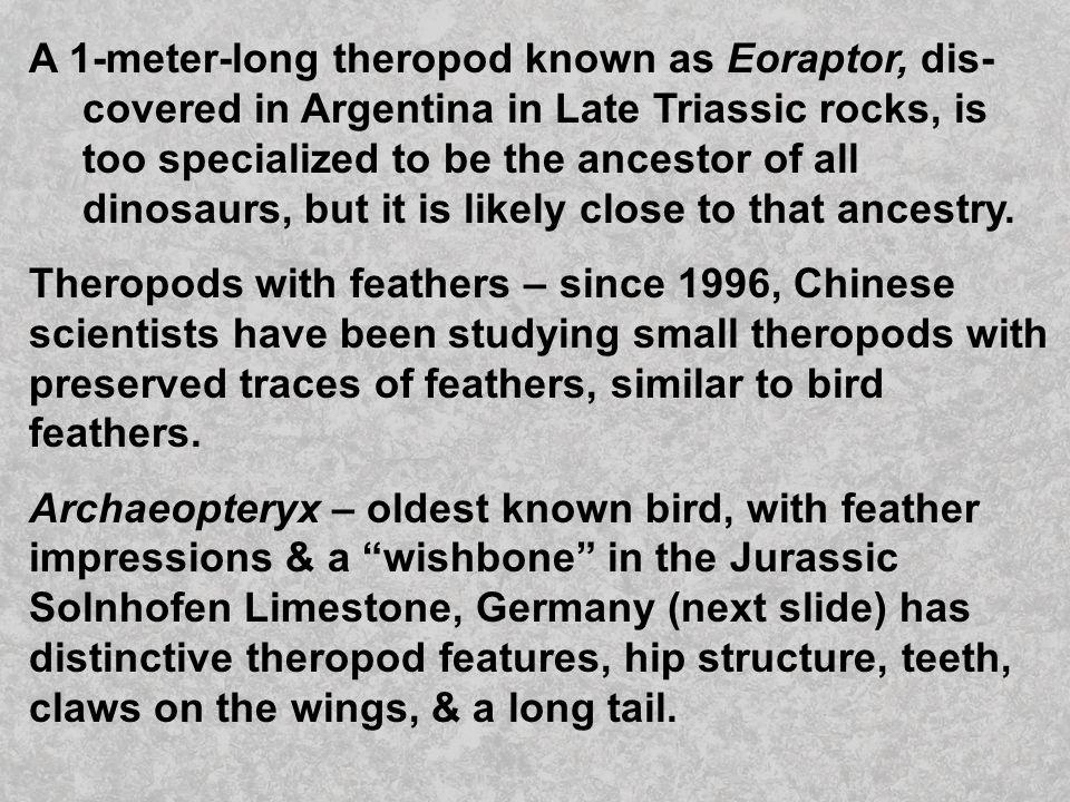 A 1-meter-long theropod known as Eoraptor, dis-