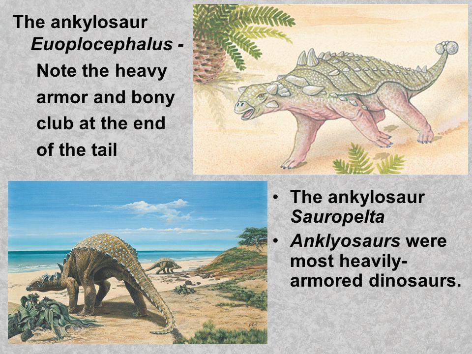 The ankylosaur Euoplocephalus -