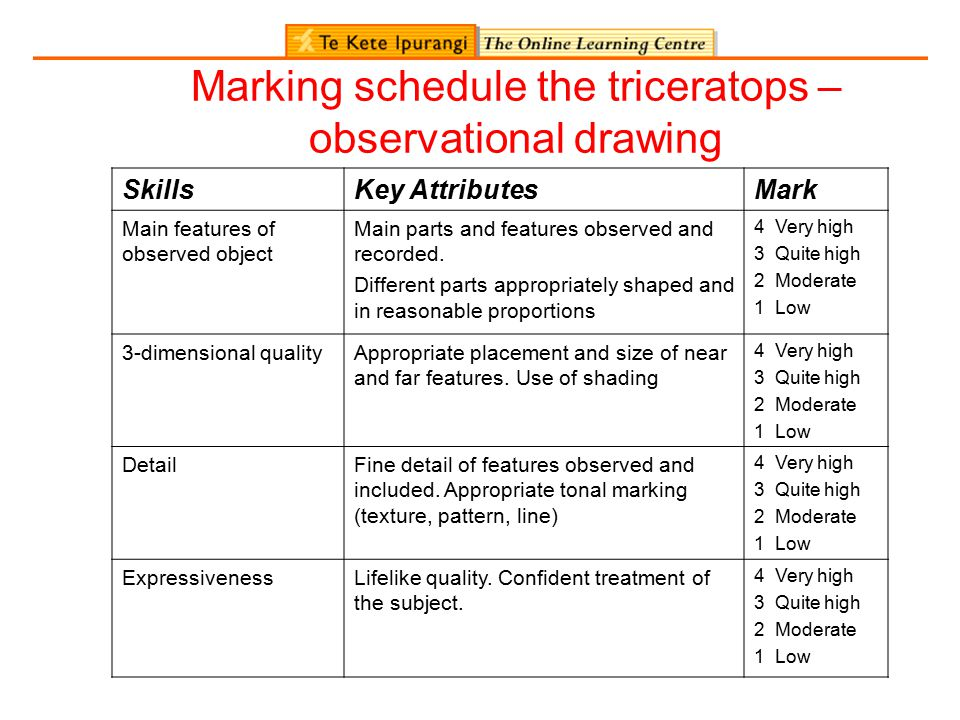 Marking schedule the triceratops – observational drawing