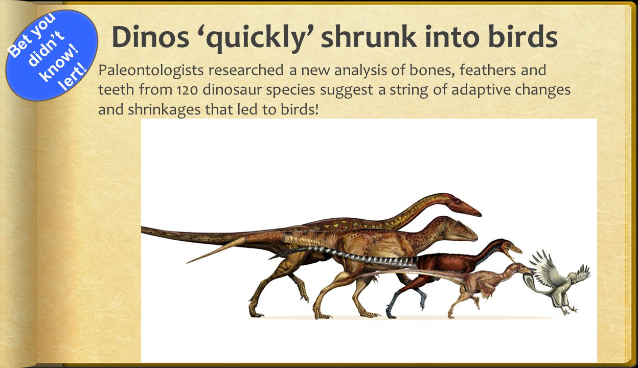 Dinos 'quickly' shrunk into birds
