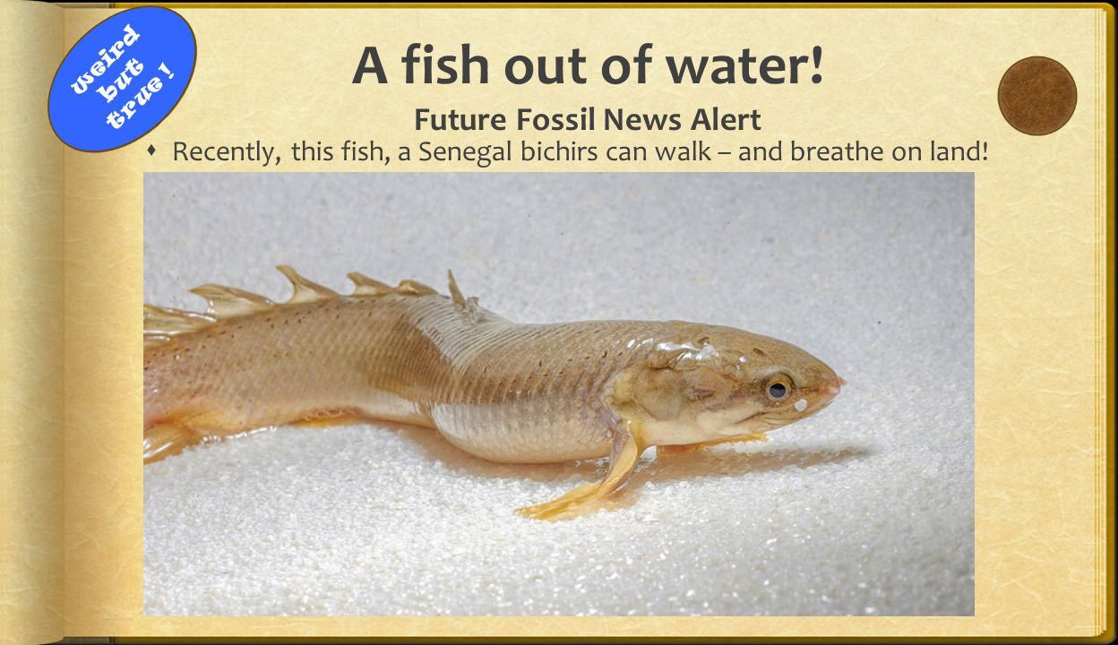 A fish out of water! Future Fossil News Alert