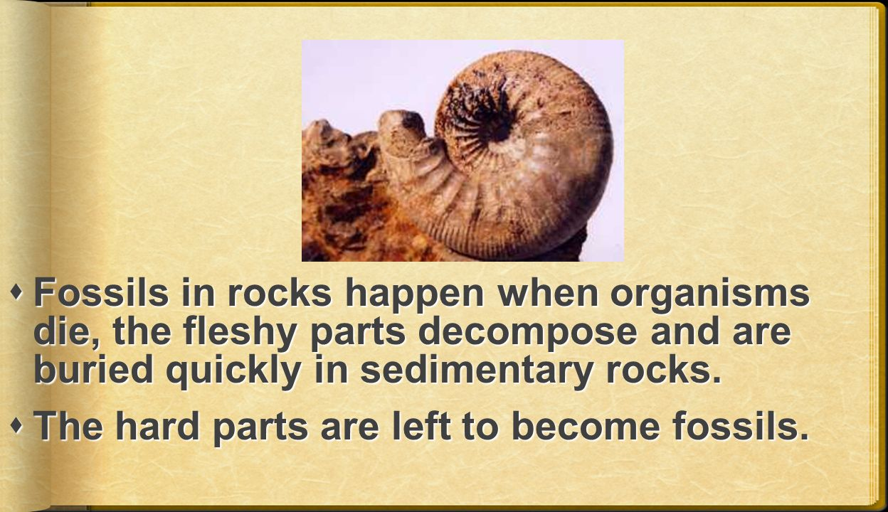 Fossils in rocks happen when organisms die, the fleshy parts decompose and are buried quickly in sedimentary rocks.