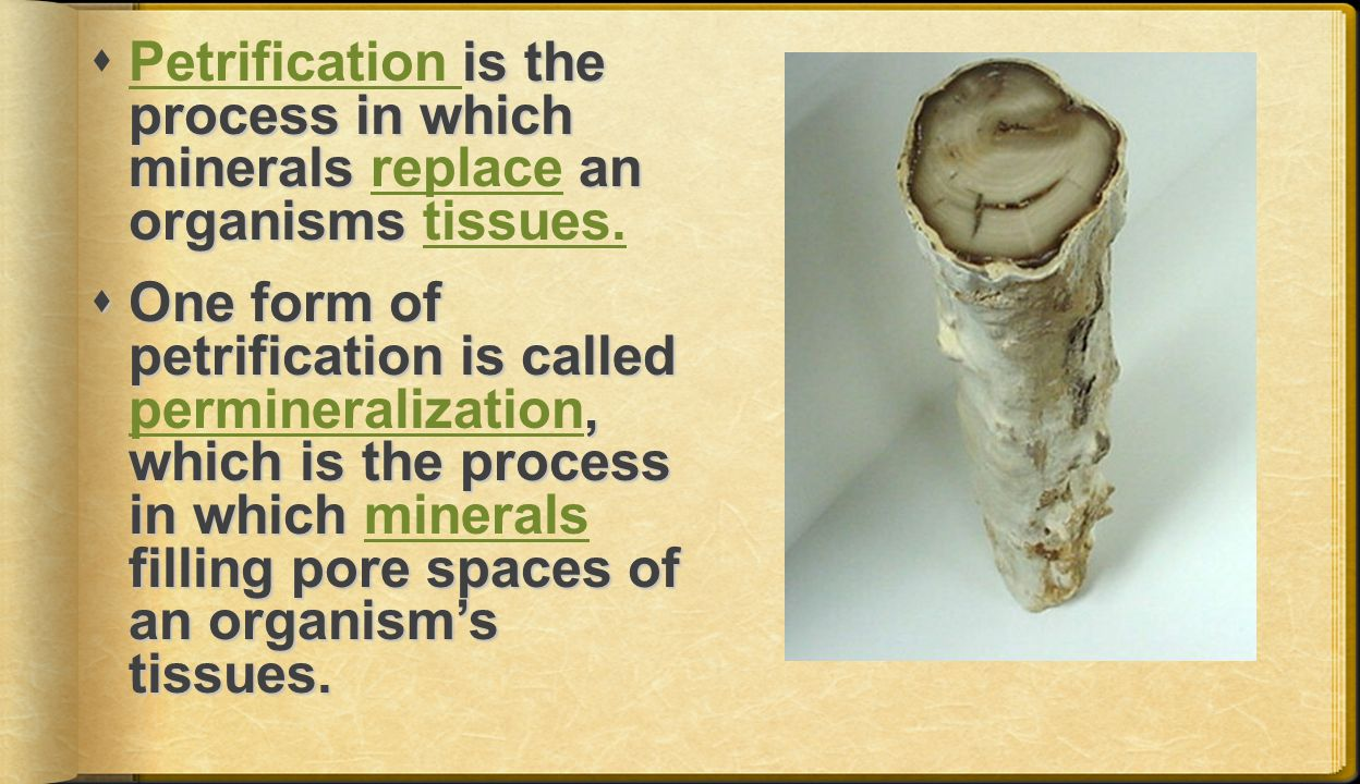 Petrification is the process in which minerals replace an organisms tissues.