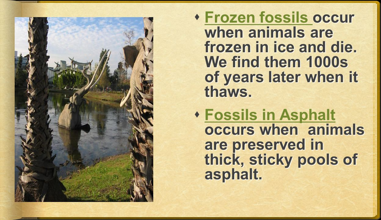 Frozen fossils occur when animals are frozen in ice and die