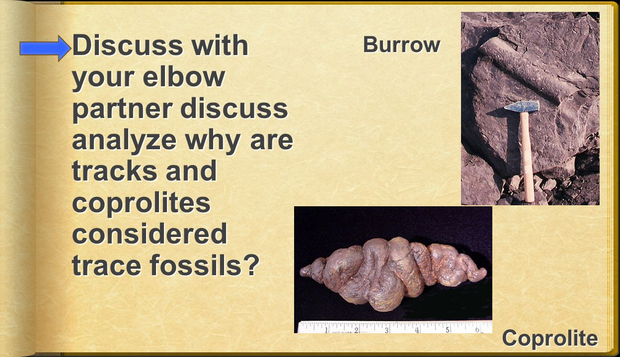 Discuss with your elbow partner discuss analyze why are tracks and coprolites considered trace fossils